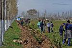 Калааны жашылдандыруу жана көрктөндүрүү максатында Бишкекте жалпы шаардык ишембилик өткөрүлдү
