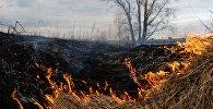 Сухая трава горит в поле. Архивное фото