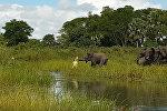 Чыгыш Африкадагы Малавия мамлекетинин улуттук паркына барган Александр Маканга крокодил менен пилдин баласынын алышкан видеосун жарыялады.