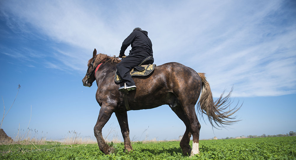 Объездчик Алмаз Колдошев на своем 920 килограммовом скакуне по кличке Барон. Архивное фото