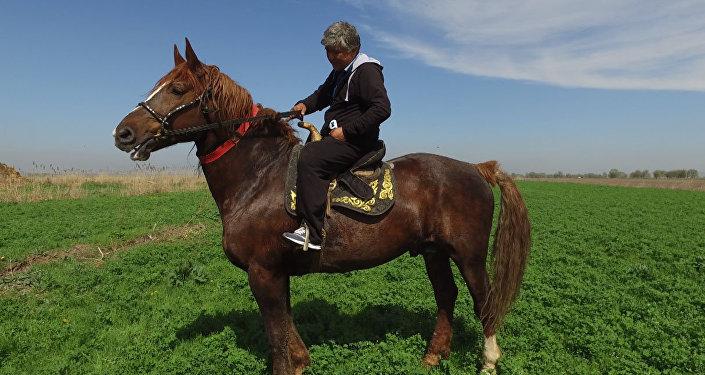 """Кыргызстандын эң чоң аргымагы. Миллион долларга берилбеген бир тонналык """"Барон"""""""