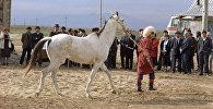 Демонстрация ахалтекинских лошадей, выращенных в Туркмении. Архивное фото