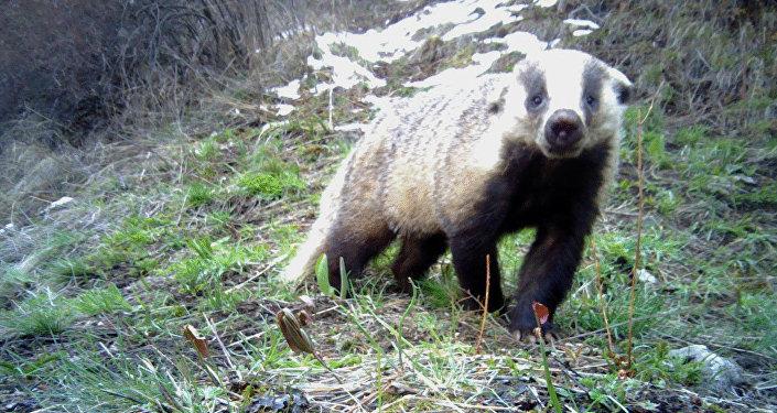 Животные в национальном парке Ала-Арча