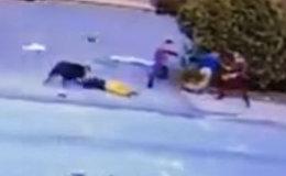 Питбуль напал на ребенка в США, спасли очевидцы — кадры с камеры наблюдения