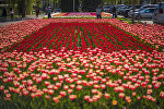 Клумба тюльпанов в Бишкеке. Архивное фото