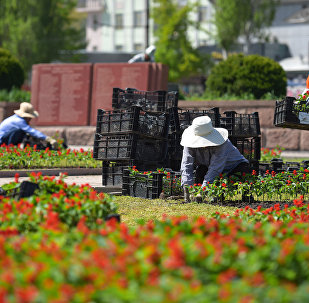 Посадка цветов в центре Бишкека