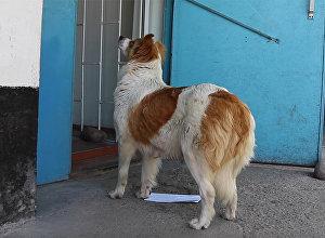 Собака пришла отправить письмо на бишкекскую почту — кадры очевидца