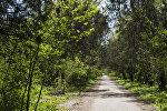 Бишкек шаарындагы ботаникалык бак. Архив