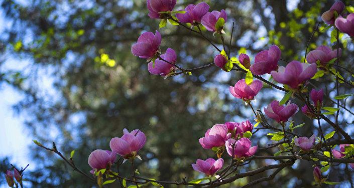 Бишкектин борборундагы ботаникалык бак