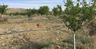 Баткен облусунун алты айылында тамчылатып сугаруу системасы колдоонуга берилди