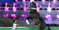 Международная специализированная конференция Ассоциации ахалтекинских лошадей в Пекине