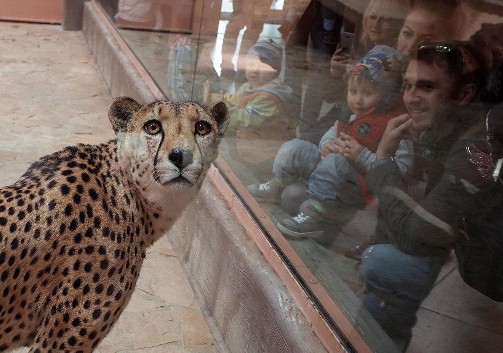 Демидов аймагындагы (Украина) зоопарктагы жырткыч айбандын жана адамдын көз караштары