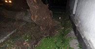 Иваницын Тыныстанов көчөлөрүнүн кесилишинде кулаган дарак.