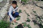 Баткен шаарындагы мектептердин биринде 8-класста окуган Эркинбек Тажидин уулу жаш курагына карабай дыйканчылыкты дыкат өздөштүрүп алган