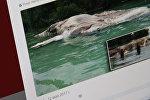 Обнаруженные останки странного существа на северном берегу острова Серам индонезийской провинции Малуку. Фото со страницы Твиттер пользователя Indonesia Breaking