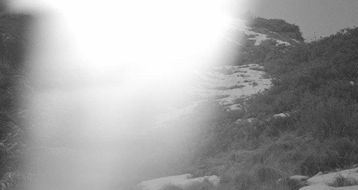 В конце декабря 2014 года в урочище Мамбет-Булак на территории природного парка Чон-Кемин были установлены срабатывающие на движение 48 фотоловушек с целью съемки диких животных, включая снежных барсов