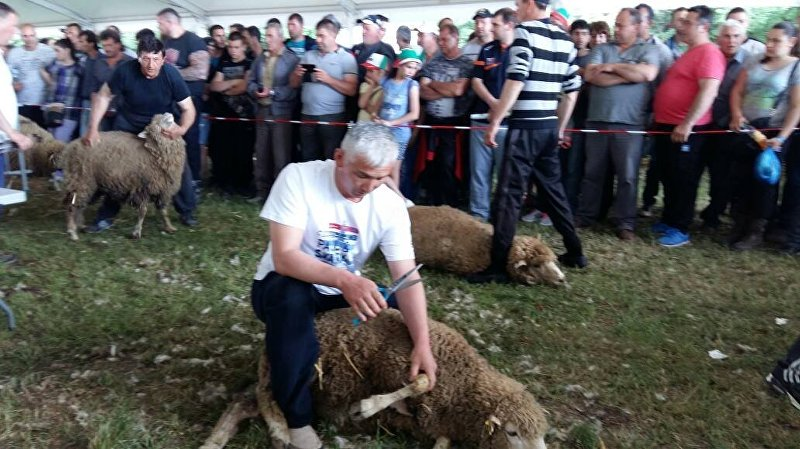 Два кыргызстанца заняли призовые места на соревнованиях по стрижке овец в Болгарии