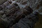 Уникальное видео — обнаружена гробница с 17 мумиями в Египте