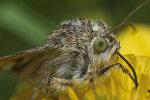 Ученым известно около 165 тысяч видов бабочек и мотыльков, причем большинство из них ведут ночной образ жизни