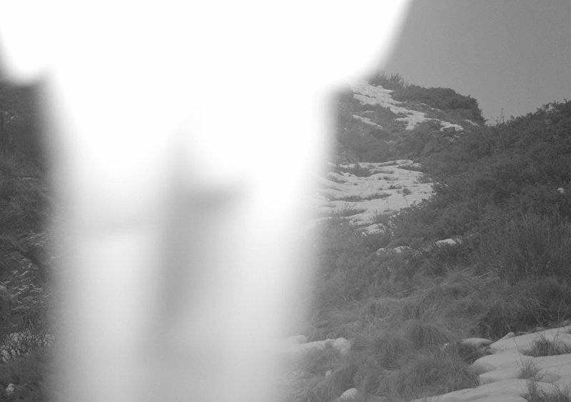 Снимок с фотоловушки с урочища Мамбет-Булак на территории природного парка Чон-Кемин