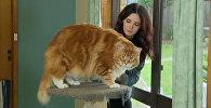 Претендент на звание самого длинного кота