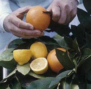 Апельсин жана лимон. Архивдик сүрөт