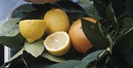Апельсин. Архивдик сүрөт