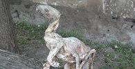 Мумифицированный скелет неизвестного существа найденная в Азербайджане