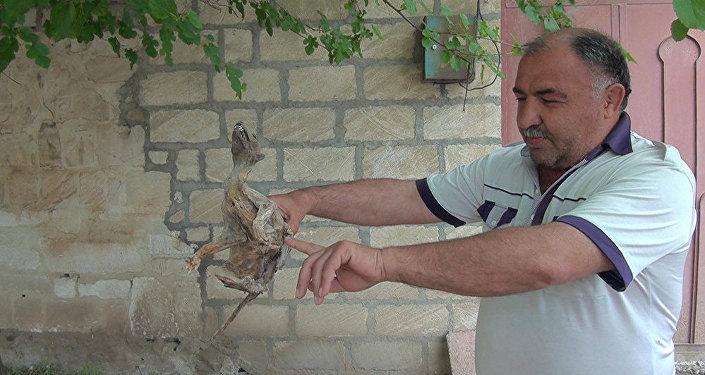 Мумифицированные останки неизвестного животного были обнаружены на территории одного из сел Товузского района