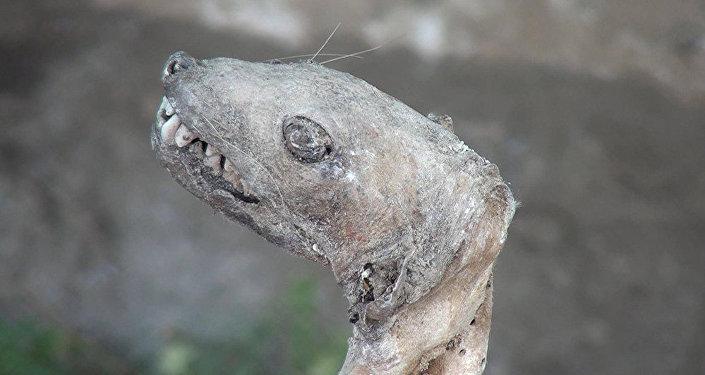 В Азербайджане найден мумифицированный скелет неизвестного существа