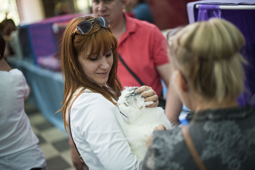 Выставка кошек в торговом центре Beta Stores в Бишкеке