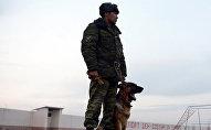 Сотрудник пограничной службы с служебной собакой в пограничной заставе. Архивное фото