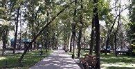 Бишкек шаарындагы Эркиндик гүл багында бак тротуарга кулап калчудай ийилип, кооптуулук жаратты