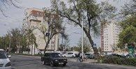 Накренившееся дерево у проспекта Манаса. Архивное фото