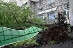 Москвадагы катуу шамалдан кулаган дарак