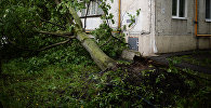 Дерево, сломанное в результате урагана в Москве. Архивное фото