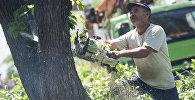 Сотрудник муниципальной службы во время вырубки деревьев. Архивное фото