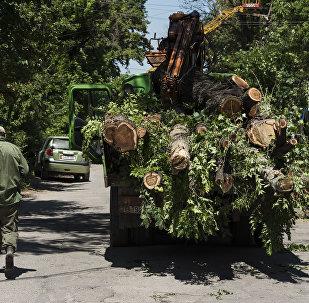 Зеленстрой муниципалдык ишканасы Токтоналиев көчөсүн кеңейтүү максатында андагы дарактарды кыйып жатат.