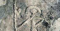 Наскальные рисунки, обнаруженные археологами в Горно-Алтайской автономной области. Архивное фото