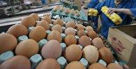 Цех сортировки и упаковки яиц. Архивное фото
