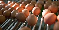 Яйцо. Архивное фото