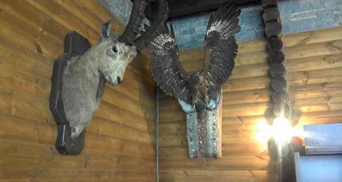 В столичном ресторане Арзу обнаружены чучела краснокнижных животных