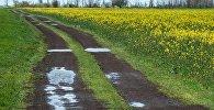 Проселочная дорога после дождя. Архивное фото