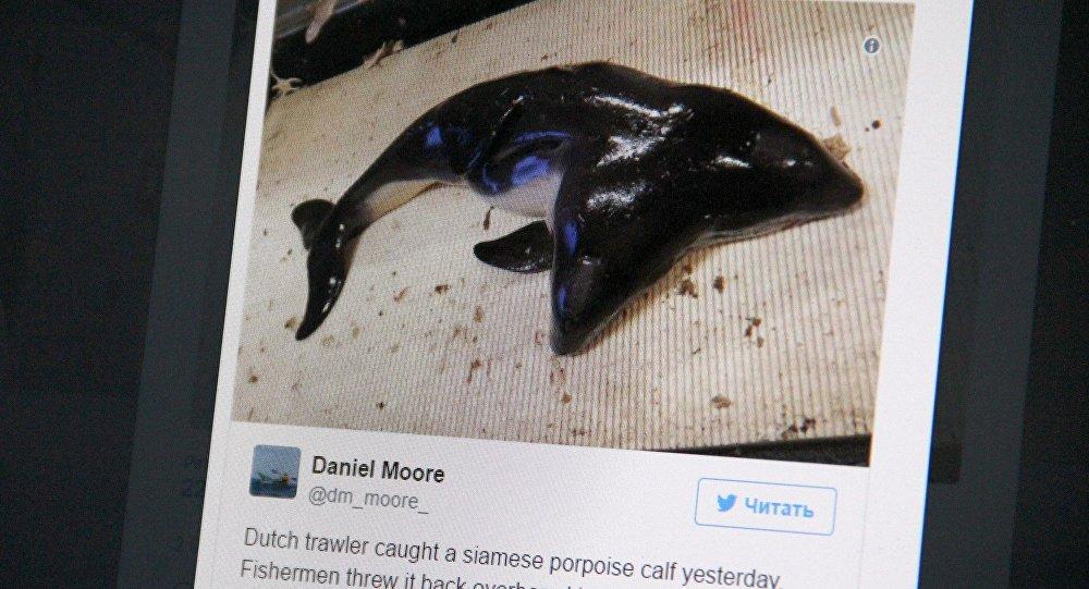 Снимок с социальной сети twitter пользователя Daniel Moore. Двухголовый дельфин