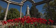 Клумбы тюльпанов в центре города Бишкек