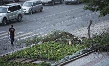 Сломанная ветка дерева из-зи сильного ветра в Бишкеке