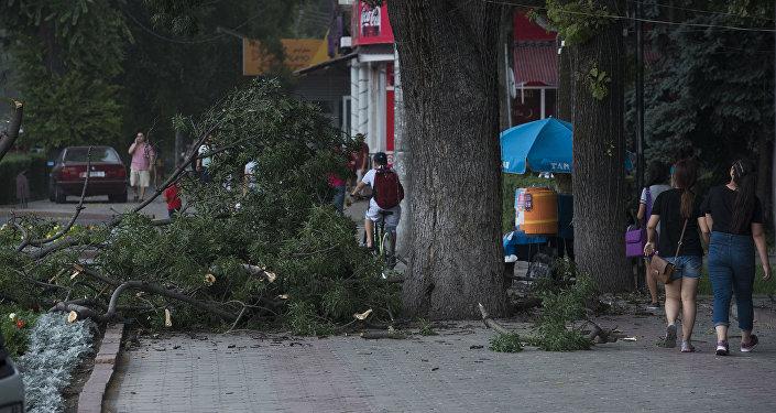 Упавшие ветки деревьев из-зи сильного ветра в Бишкеке. Архивное фото