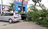 Последствия сильного ветра в Бишкеке