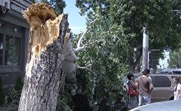 Сломанный пополам тополь и придавленные машины — кадры с улицы Шопокова