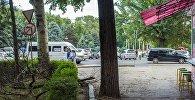 Упавшие из-за сильного ветра ветки деревьев, на бульваре Эркиндик в Бишкеке. Архивное фото